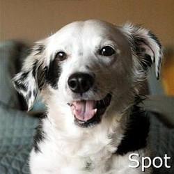 Spot_TN.jpg