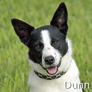 Dunn_TN.jpg