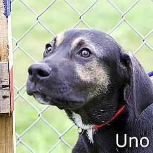 Uno-TN.jpg