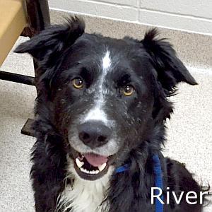 River_TN.jpg