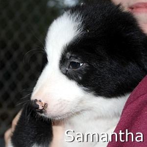 Samantha_TN.jpg