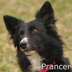 Prancer_TN1.jpg