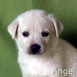 Angel_TN.jpg