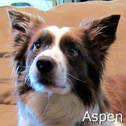 Aspen_TN.jpg