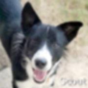 Scout-Profile.jpg