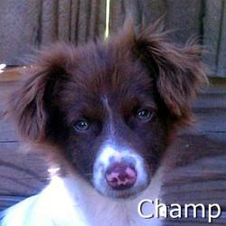 Champ_TN.jpg