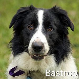 Bastrop_TN.jpg