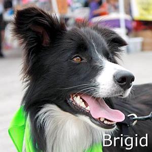 Bridig_TN.jpg