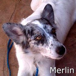 Merlin_TN.jpg