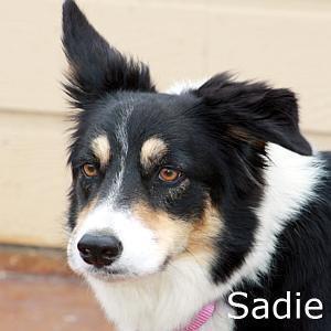 Sadie_TN.jpg