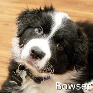 Bowser_TN.jpg