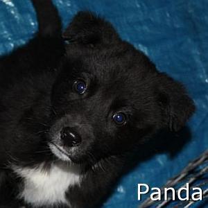 Panda_TN.jpg