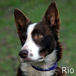 Rio_TN.jpg