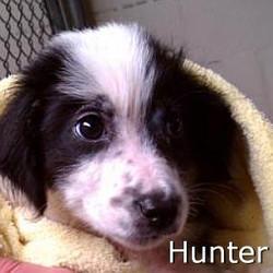 Hunter_TN.jpg