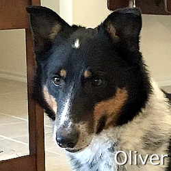 Oliver-TN.jpg
