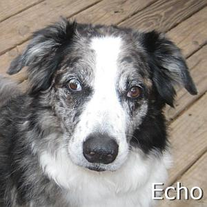 Echo_TN.jpg