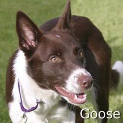 Goose_TN.jpg