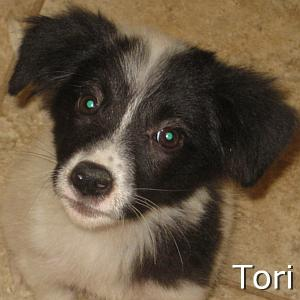 Tori_TN.jpg