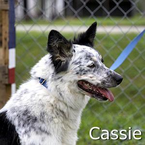 Cassie=TN.jpg