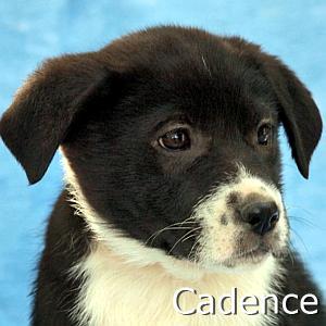 Cadence_TN1.jpg