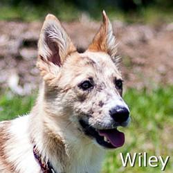Wiley-TN.jpg