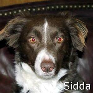 Sidda_TN.jpg