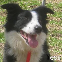 Tess_TN.jpg