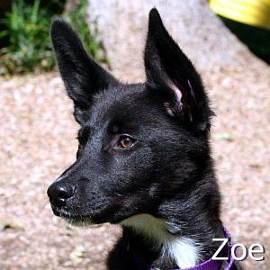 Zoe3_TN_New.jpg