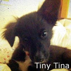 Tiny Tina_TN.jpg