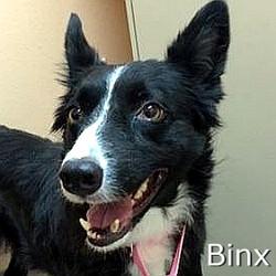Binxl-TN