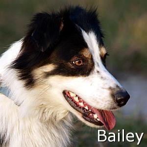 Bailey2_TN.jpg