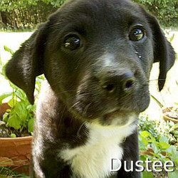 Dustee_TN.jpg
