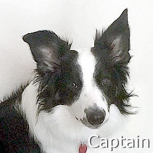 Captain_TN