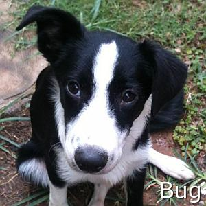 Bug_TN.jpg