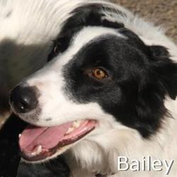 Bailey1_TN.jpg