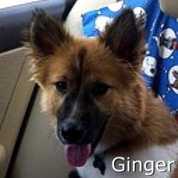 Ginger2_TN.jpg