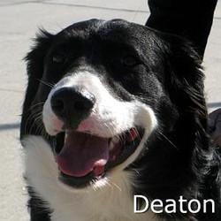 Deaton_TN.jpg