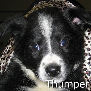 Thumper_TN.jpg