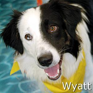 Wyatt2_TN.jpg