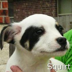 Squirt_TN.jpg