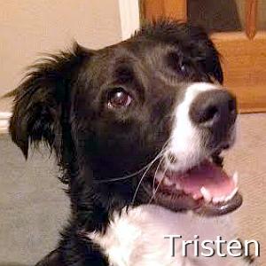 Tristen_TN.jpg
