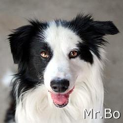 Mr.Bo_TN.jpg