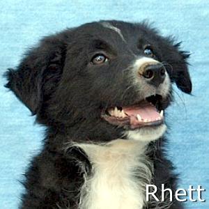 Rhett_TN.jpg