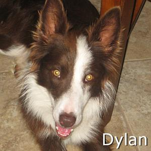 Dylan_TN.jpg