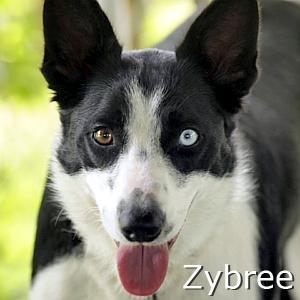 Zybree_TN.jpg