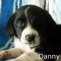 Danny_TN.jpg