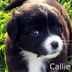 Callie_TN.jpg