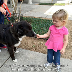 Unleashed - Beau at 10 years 9-5-2015.jpg