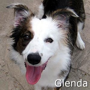 Glenda_TN.jpg