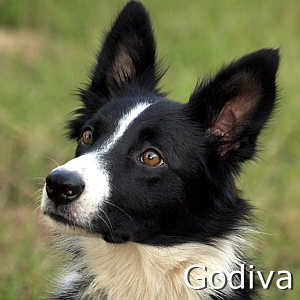 Godiva_TN.jpg